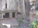 Kaimo gyvūnai